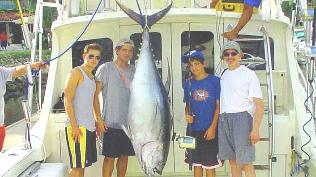 250lb yellow fin tuna